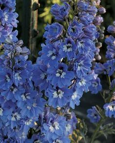 The Best Flowers for Your Cutting Garden If you only grow a handful of vaseworthy flowers, these are the ones you need by Catherine Mix f...