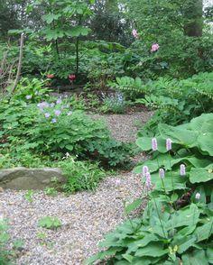 gravel path through woodland garden