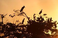 Ninhais de aves pantaneiras, às margens da Estrada Parque, no Mato Grosso do Sul, Brasil.  Fotografia: Claudia Gaigher.