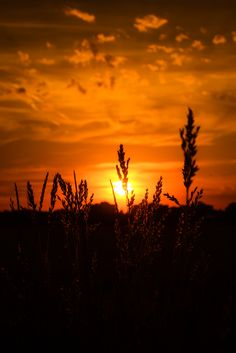 "~Autumn~ ""Days decrease, / And autumn grows, autumn in everything."" ~ Robert…"
