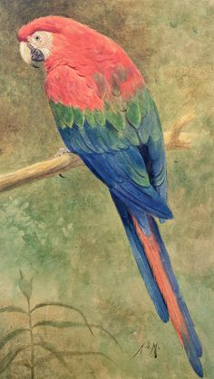 Red And Blue Macaw - Henry Stacy Marks (1829-1898)