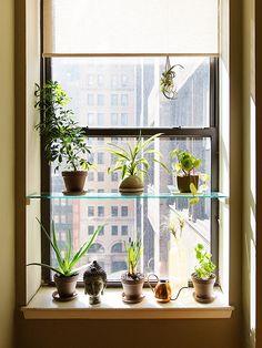 DIY: Glass shelf for window garden.