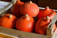 Zdravé a výborné recepty z dýně hokaido