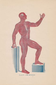 Antique Human Muscles Illustration Chart - 1897 Illustrated Medical Book Plate