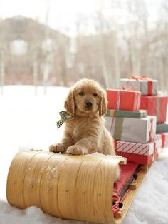Santa Paws is on his merry way