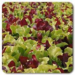 Organic Gourmet Lettuce Mix...pretty salad