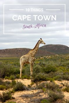 10 Things To Do In Cape Town, South Africa treasuretromp.com...
