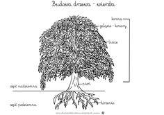 Budowa drzewa www.dzieciakiwdomu.blogspot.com