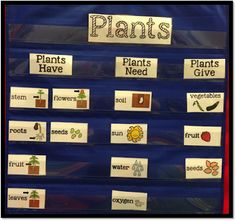 All About Plants, what the need what they have and what they give a pocket chart sorting activity to enhance your all about plants unit