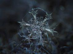 Macro snowflake photography by Alexey Kljatov