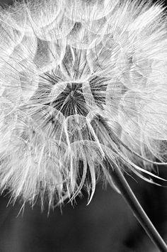 Autumn Song Photography