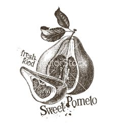 Pomelo logo design template fresh fruit vector rustic sketch by AvaBitter on VectorStock®