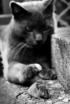 I must touch you to see if you're real. You can't be b/c what kind of mouse dares cross my path?