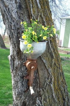 #pots #planters #pottery #containers  Unique Garden Junk Art | Tree 'planters': Planting in a tree | Flea Market Gardening