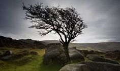 Image result for wuthering heights set