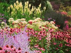 Expert Tips On How To Achieve Summer Garden Borders – Best Herbaceous Border Plants and Ideas Garden Border Plants, Garden Edging, Garden Borders, Garden Beds, Types Of Shrubs, Lost Garden, Grass Flower, Herbaceous Border, Colorful Garden