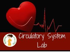 Circulatory System Lab Hands-on way to practice science skills and better understanding of the circulatory system