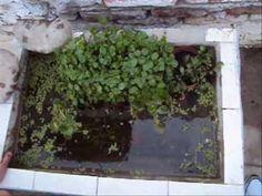 Como hacer un estanque? (En recipiente) - YouTube
