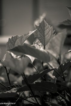 leaves by sanny abella vito on 500px