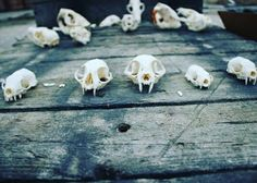 Skulls for sale shipping worldwide
