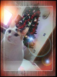 Lluna wishes you Merry Xmas