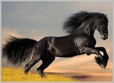 immagini di cavalli frisoni - Cerca con Google