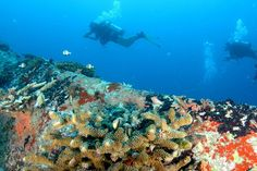 Diving Enthusiasts Could Measure Ocean Temperatures