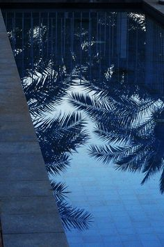 dreaming of palm trees Enjoy The Ride, Everything Is Blue, Bleu Pastel, Tropical, Grand Tour, Blue Aesthetic, Photos, Pictures, Historical Sites