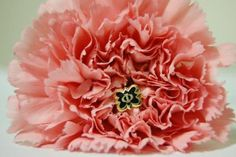 beautiful carnation and phi pin
