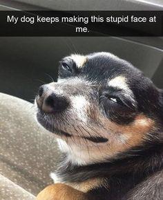 Silly face dog