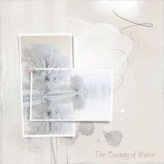 The Beauty of Winter - Oscraps Gallery