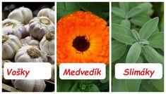 VoškyVýluh zo žihľavy:Najúčinnejšie pôsobí na rastliny, ktoré sú mladé a dosiaľ nevytvorili kvety. Výluh vyrobíme z 1 kg natrhanej čerstvej žihľavy a 10 l vody – najlepšie dažďovej. Necháme vylúhovať 1 deň a potom scedíme … Pumpkin, Vegetables, Ladder, Flowers, Buttercup Squash, Pumpkins, Vegetable Recipes, Squash