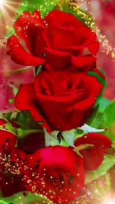 Good Morning Beautiful Flowers, Good Morning Roses, Good Morning Images Flowers, Beautiful Love Pictures, Beautiful Rose Flowers, Rose Flower Wallpaper, Wallpaper Nature Flowers, Beautiful Flowers Wallpapers, Rose Flower Photos