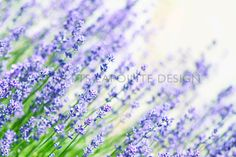 stock photography tslapointedesign.com  http://www.tslapointedesign.com/notebook/
