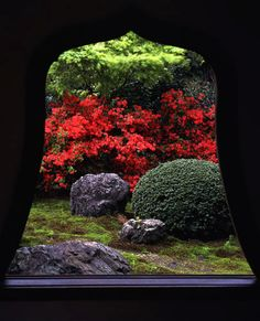 Kirishima Azalea, on the grounds of Tentoku-in, a subtemple of Tofuku-ji Japan