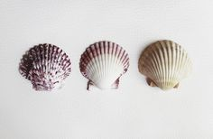 shells | Flickr