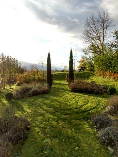 Lavenders and cypressus