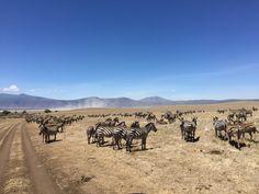 Schon der Beginn ist spannend! Anflug auf den Flughafen Kilimanjaro, ein toller Name – und ein toller Berg, einer der höchsten der Welt und immer mit Schnee bedeckt und das mitten in Afrika. Wir kommen abends an, der Weg zur Kia Lodge – nur 1 Kilometer vom Flughafen entfernt- ist holprig, aber der Blick bei …