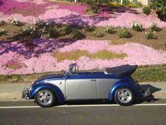 1962 VW Beetle Convertible For Sale @ Oldbug.com
