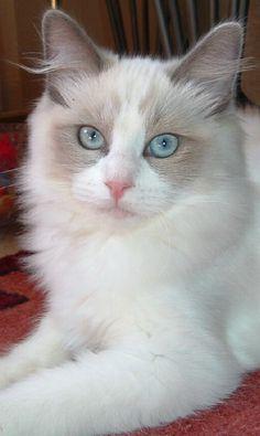 Ole Blue Eyes..