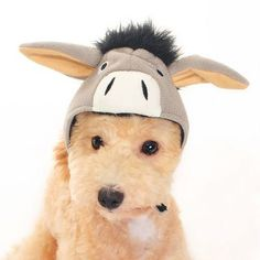 Dog Halloween Costume: Donkey Hat (X-Small) - http://www.thepuppy.org/dog-halloween-costume-donkey-hat-x-small/