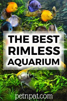 3 Best Rimless Aquarium Reviews 2020 [UPDATED]  #aquarium #fish #fishtank #pets #animals #tank #tropicalfish Mini Aquarium, Tropical Aquarium, Aquarium Fish Tank, Tropical Fish, Aquarium Stand, Animals For Kids, Animals And Pets, Baby Animals, Funny Animals