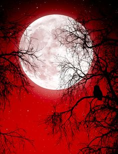 Moon and a blood red sky Red Wallpaper, Galaxy Wallpaper, Nature Wallpaper, Wallpaper Backgrounds, Sky Moon, Moon Art, Moon Pictures, Moon Painting, Moon Photography