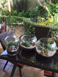 Terrarium con suculentas cactus tamaño grande