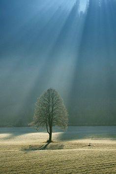 Just beautiful photo of a tree in sun light rays All Nature, Amazing Nature, Nature Tree, Pretty Pictures, Cool Photos, Beautiful World, Beautiful Places, Simply Beautiful, Beautiful Morning