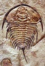 WHERE TO FIND FOSSILS IN ARIZONA