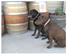 Heard about the wines, dogs sealed the deal. Dogs - Vincent Arroyo Winery