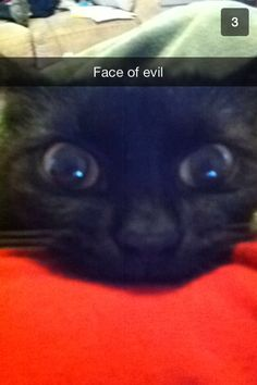 Cat snapchats are the best lol @ashleyphilllips #cat #snapchat