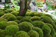 carpet moss mounds - Google Search