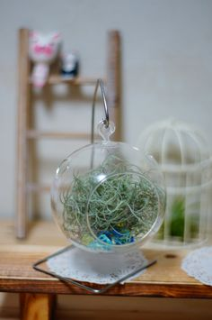 Tillandsia Air Plant Usneoides Spanish Moss by Joinflowerco